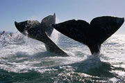 Whales pass by the Homes From Jan - Apr